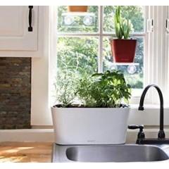 Свежая зелень или просто сад у вас дома