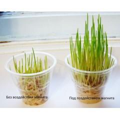Влияние Неодимового магнита на растения